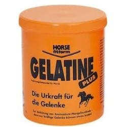 Gelatina 1Kg, cuidados del caballo